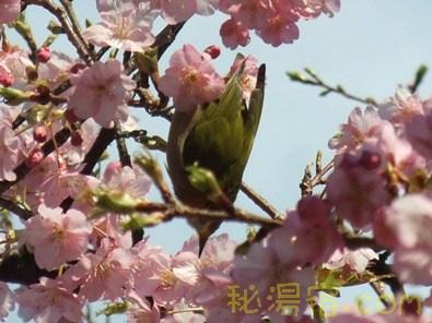 福田家27