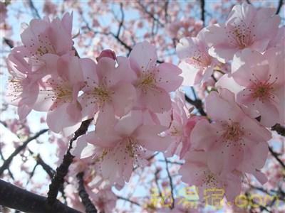 南伊豆湯の花観光交流館17