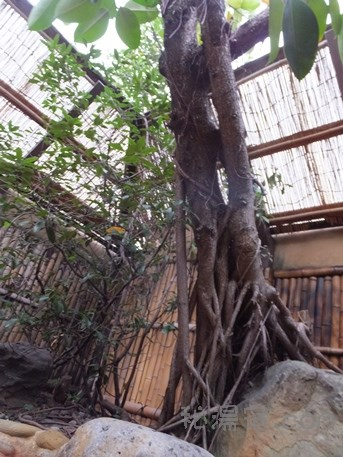 平山旅館25