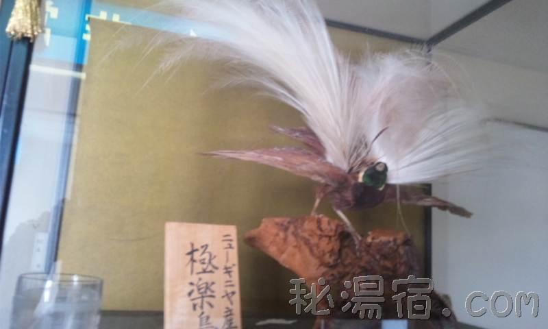 湯荘白樺29