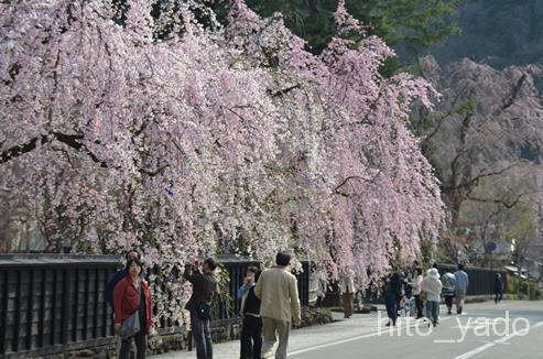 角館武家屋敷通りの桜 ★★★★★