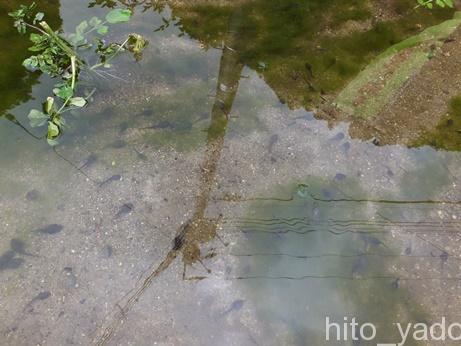 日光沢温泉19