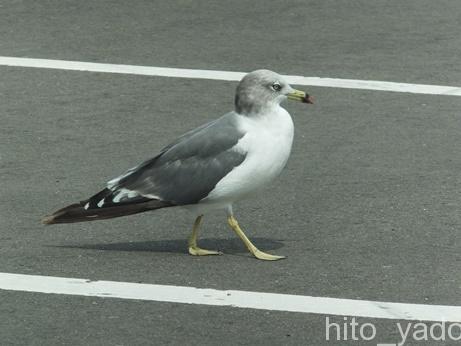 津軽海峡フェリー5