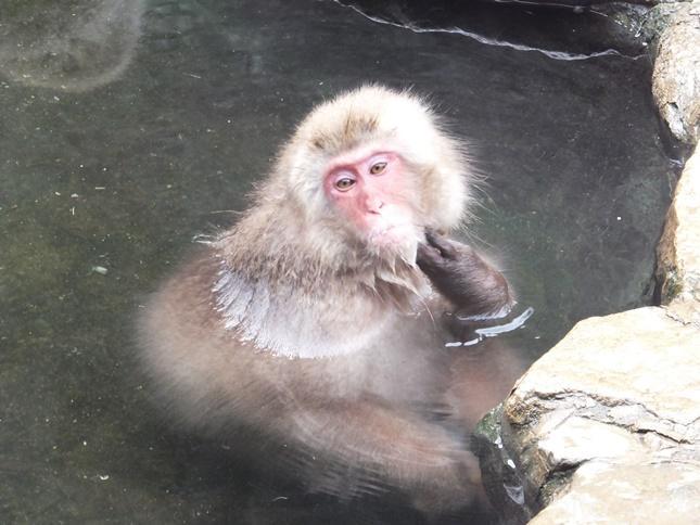 地獄谷 野猿公苑 温泉に入る猿