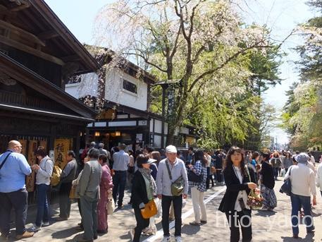角館の桜2015-30
