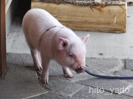 天狗温泉 浅間山荘14