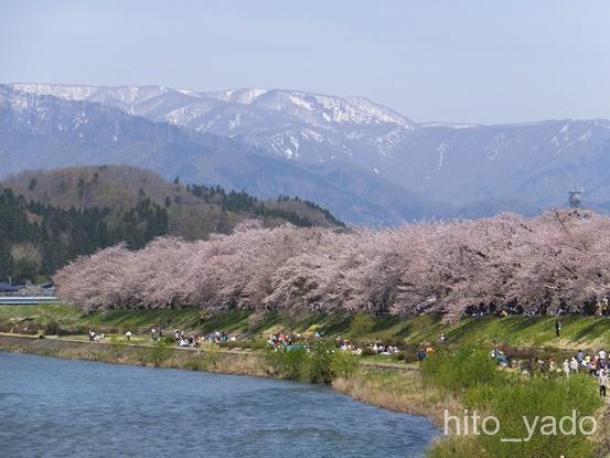 角館の桜2015-15