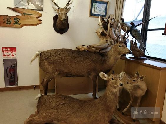 唐沢鉱泉 本館2階にある鹿の剥製