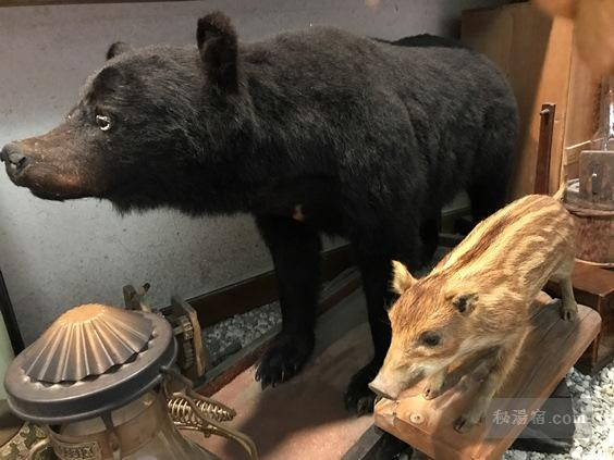唐沢鉱泉 新館廊下にある熊とウリボーの剥製