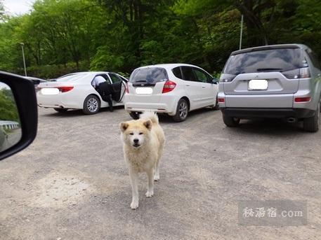 オソウシ温泉の犬 ケン